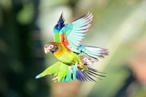wild parrots vacation